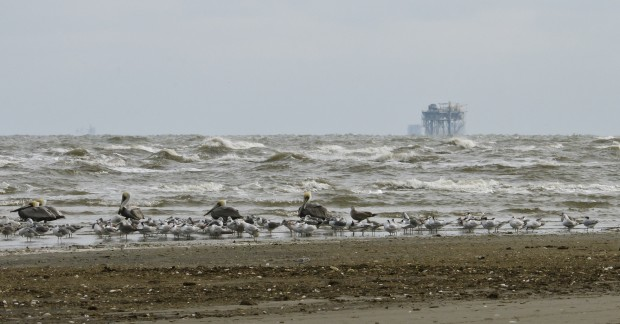 Birds and rig on Elmer's Island, LA.