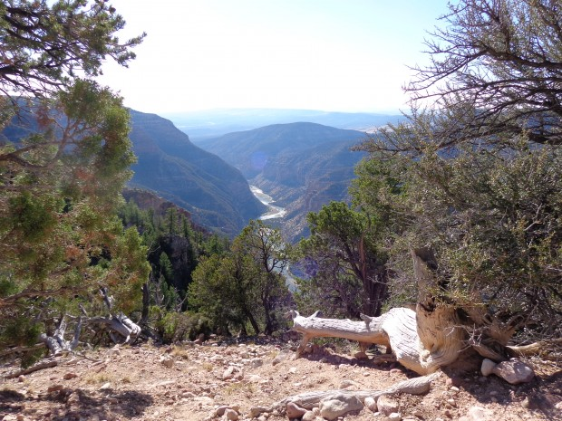 Back in Colorado at end of Harpers Corner trail in Dinosaur National monument. Looking down at the land that Stegner helped save.