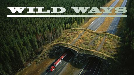 wild-ways-vi